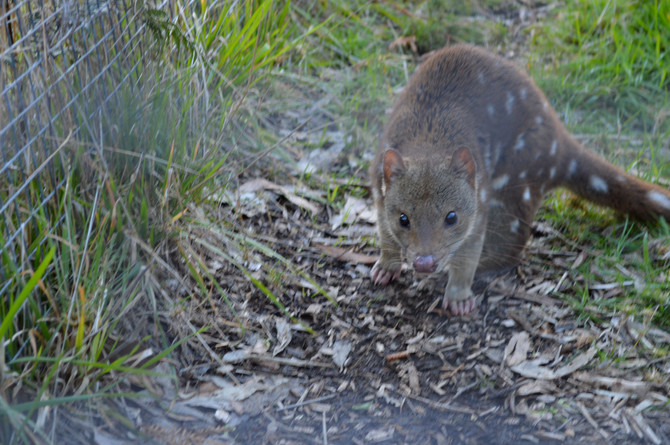 Progress in improving the protection of species and habitats in Australia