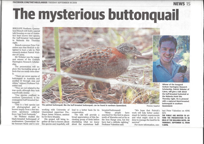 The mysterious buttonquail