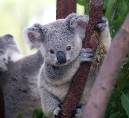Government's threatened species plan 'last chance to get it right'