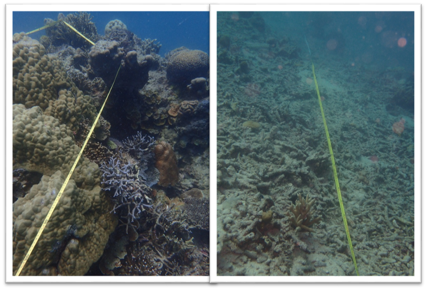 Intact vs bombed coral reefs on our survey