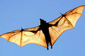 A bat. Just because I can.