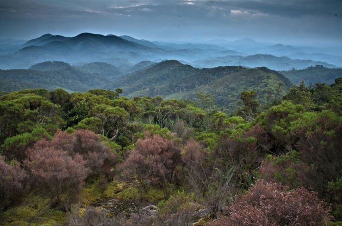Ecology: a global plan for nature conservation