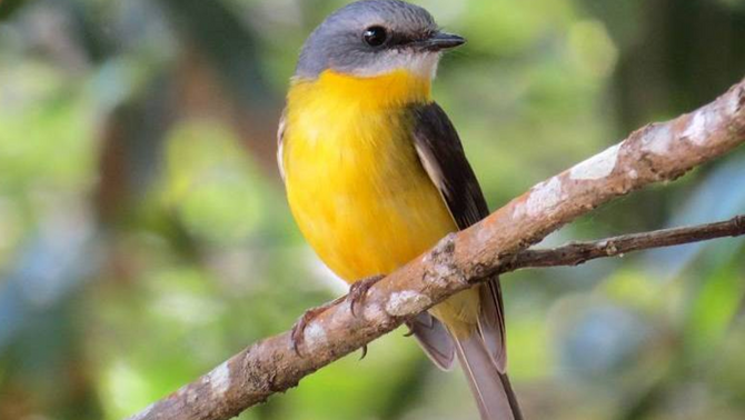 Clearing 1 ha in south-east Qld can affect up to 180 bird species, warn scientists