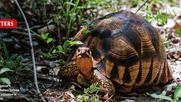 Madagascar: Crime threatens biodiversity.