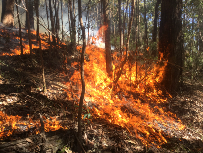 Optimizing the spatial planning of prescribed burns to achieve multiple objectives in a fire-depende