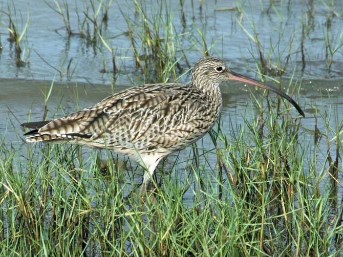 Cost-effective conservation: Study identifies key 'umbrella' species