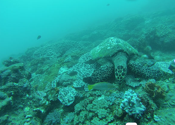Designing Climate-Resilient Marine Protected Area Networks by Combining Remotely Sensed Coral Reef H