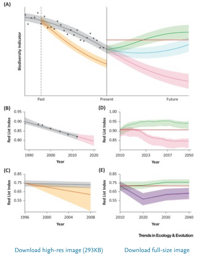 Scenarios and models to support global conservation targets