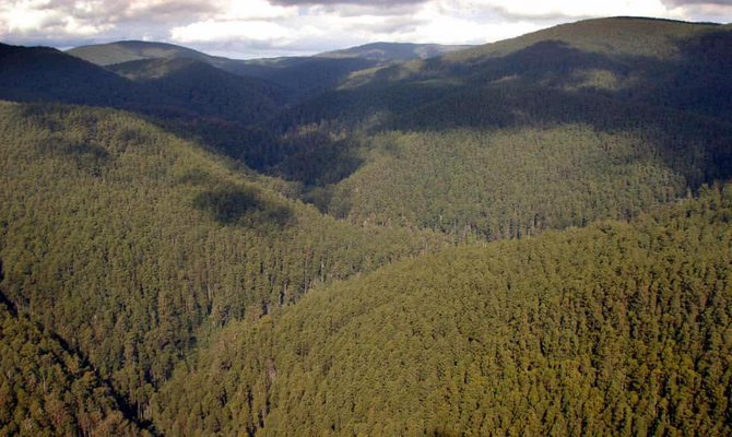 Climate change threatens 26 native species in Great Dividing Range, study finds
