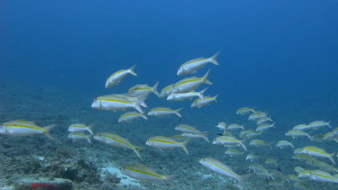 Shortfalls in the global protected area network at representing marine biodiversity
