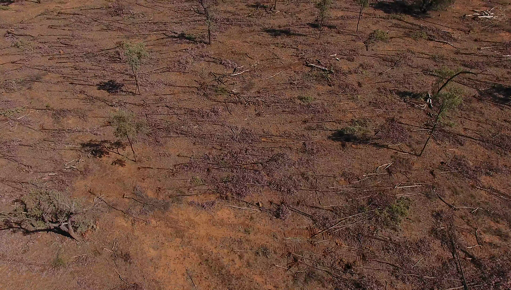Legalised clearing in Queensland that doesn't need a permit