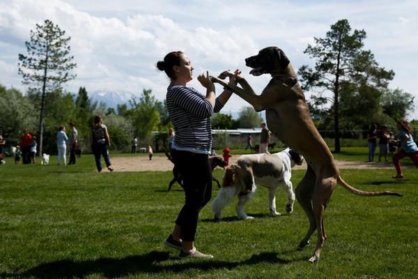 dogs park.jpg