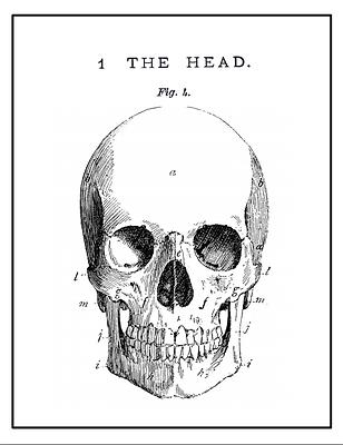 Free Halloween Skull Printable