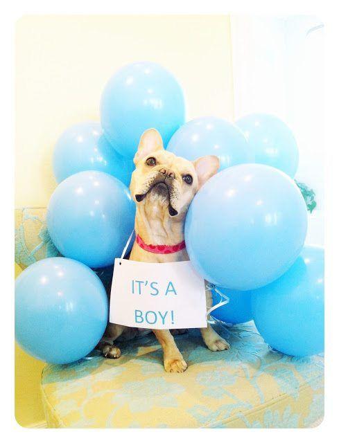 Gender Reveal Dog