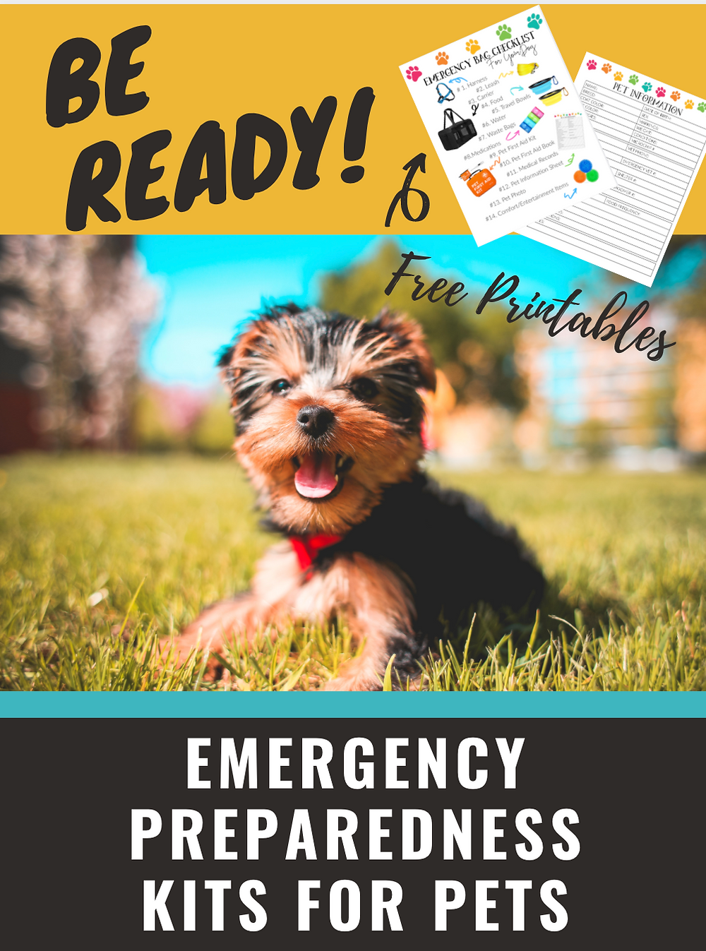 Dog with emergency disaster kit for pets