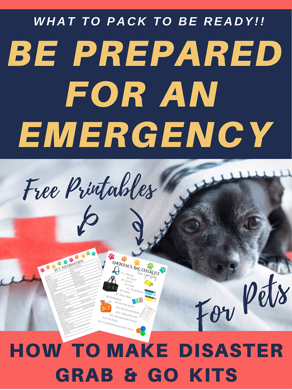 Dog in red cross blanket and emergency kit for pets