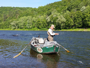 Fly Fishing Report for the Upper Delaware and Catskill River
