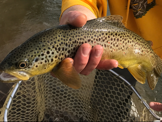 April 4th Catskills Fishing Report