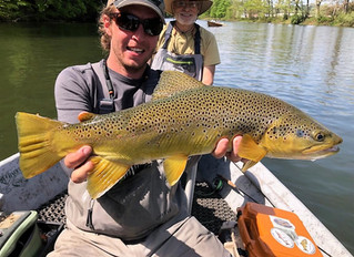 Upper Delaware River Fly Fishing Report