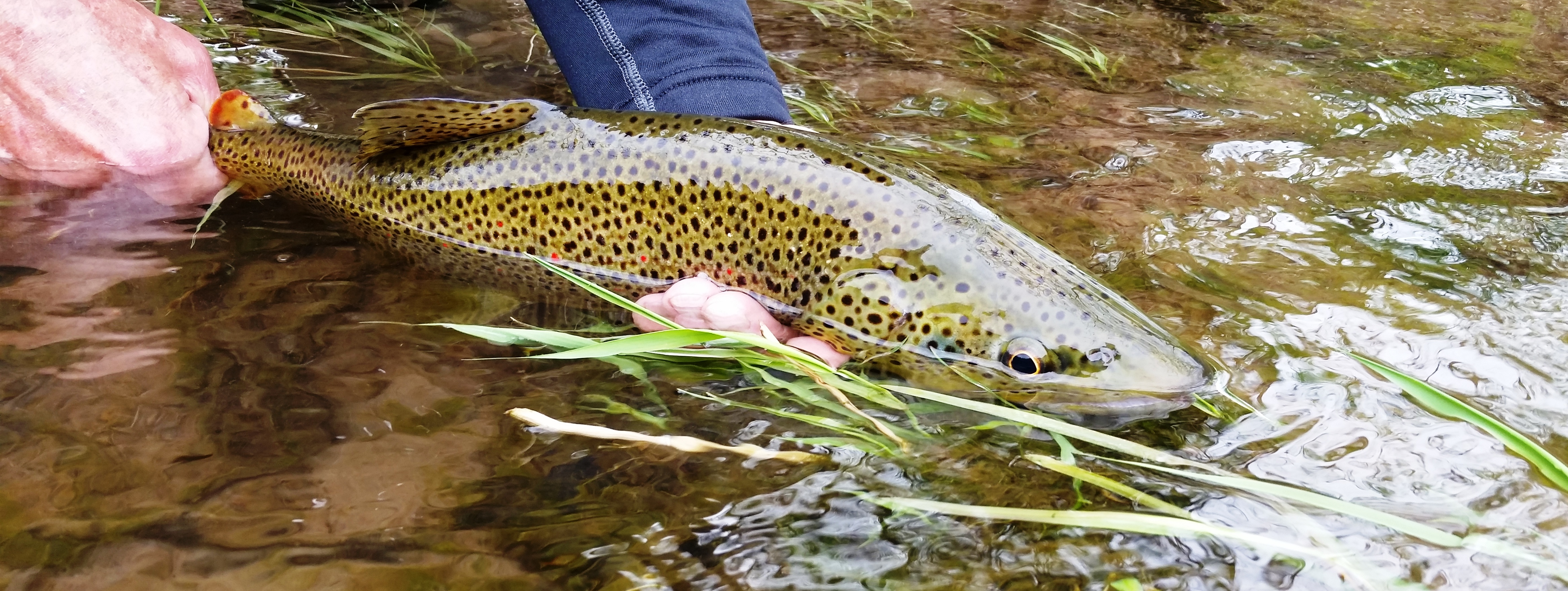 Fly fishing report for the upper delaware and catskill for De fishing report