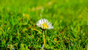 5 Fun Things to Do While the Garden Grows
