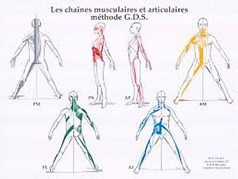 Tratamento postural Brusque. Reeducação postural Brusque. Alinhaento Postural brusque. GDS. Método deCadeias Musculares. Alívio de tensões, dores e lesões. Procedimento terapêutico que reorganiza o corpo. RPG Brusque.