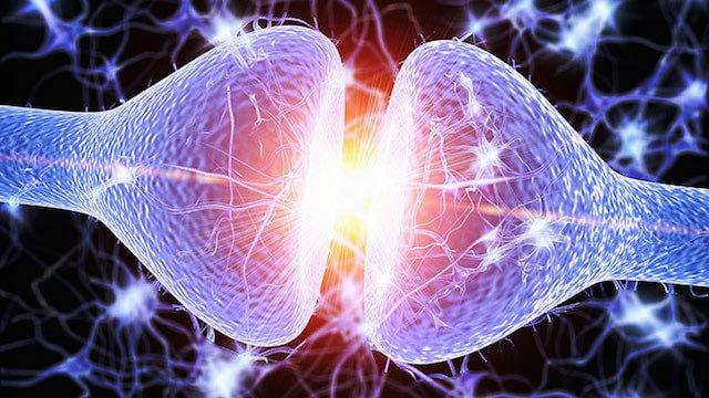 Neurotransmitter Analysis
