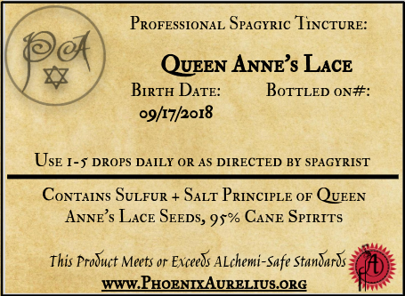 Queen Anne's Lace Spagyric Tincture