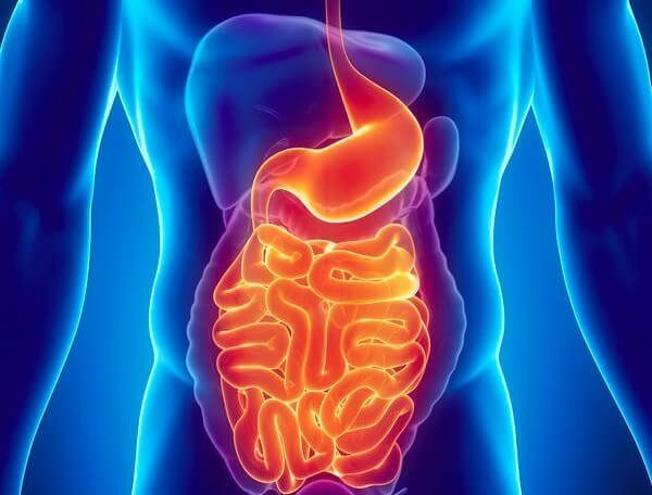 Gastrointestinal System Analysis