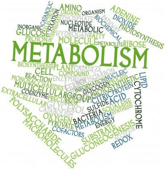 Metabolism Analysis