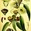 Thumbnail: Eucalyptus - 20g