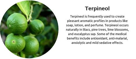 Cannabis-terpenes-Terpineol.png