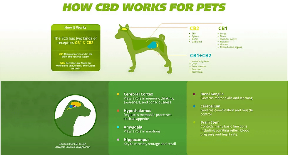 How_CBD_works_for_Pets.png