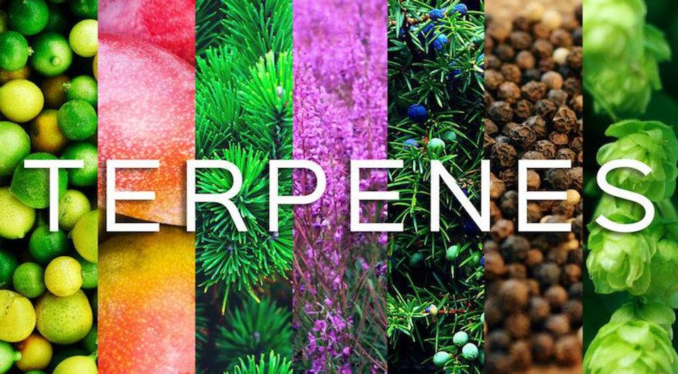 Terpenes_1200x.jpg