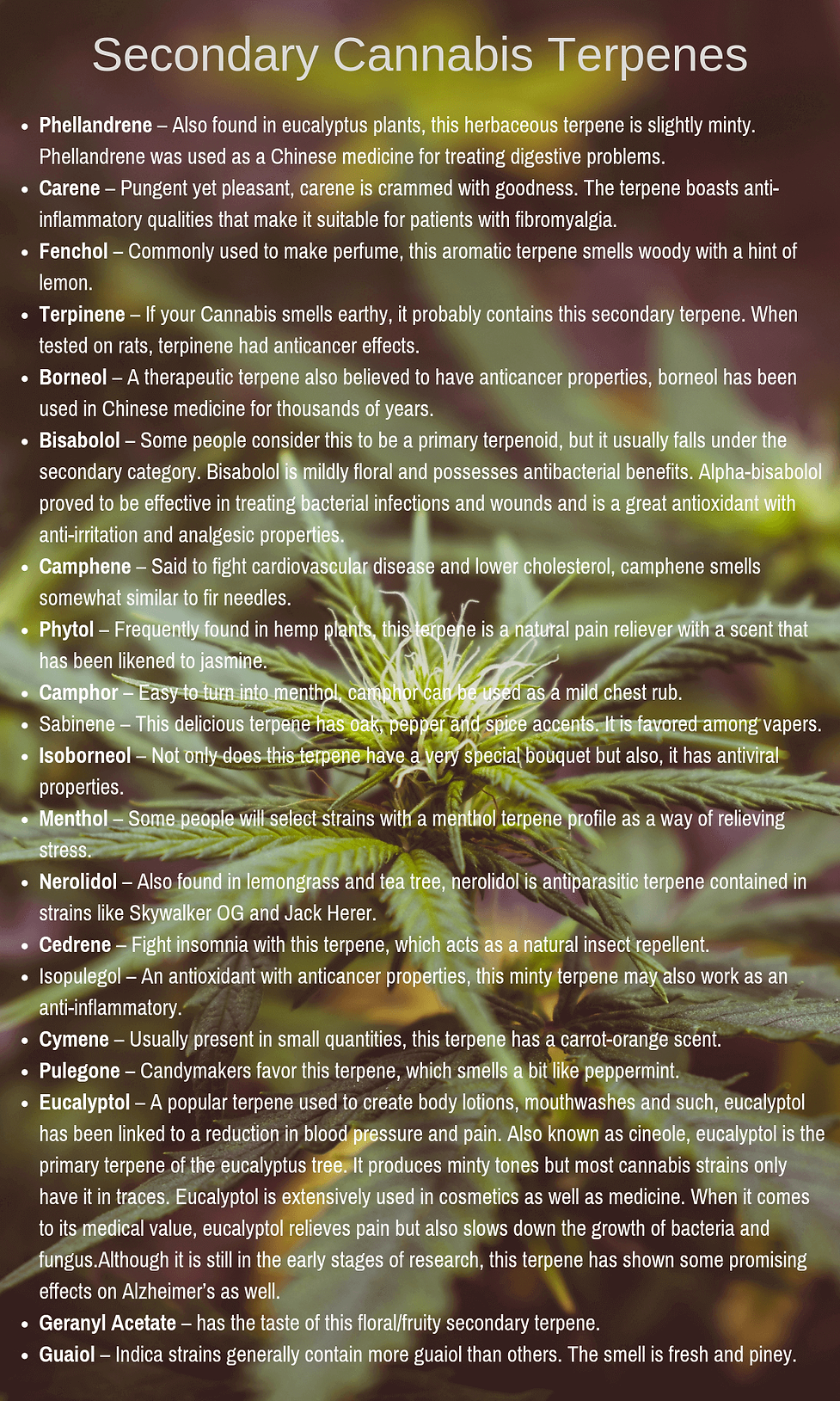 Secondary-cannabis-terpenes-1.png