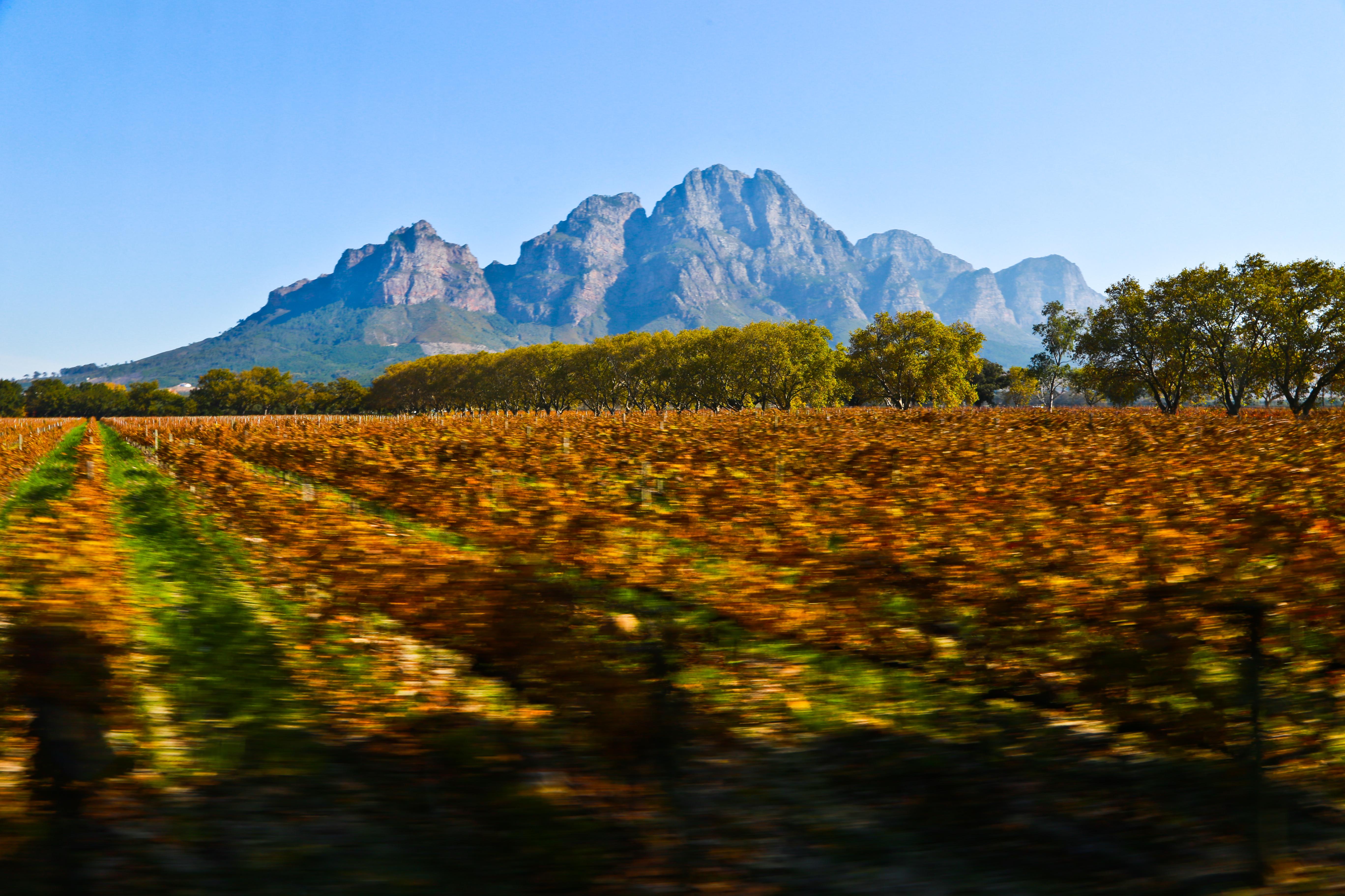 África_Do_Sul,_20130005