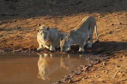 África_Do_Sul,_20130007