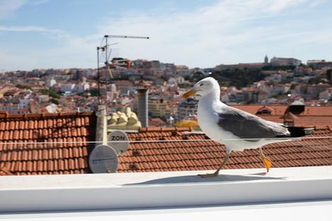 PRT 2019 - Una casa portuguesa