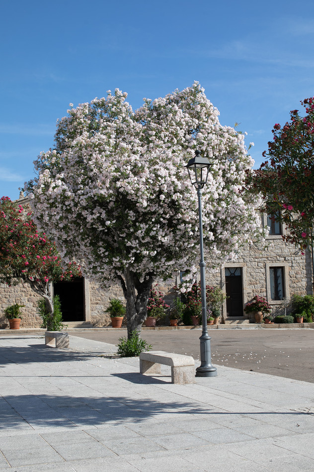 ITALY - SARDINIA -  SAN PANTALEO - LONELY WANDERS