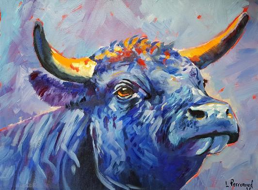 Vache d'Hérens