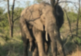 SafariElephants.jpeg