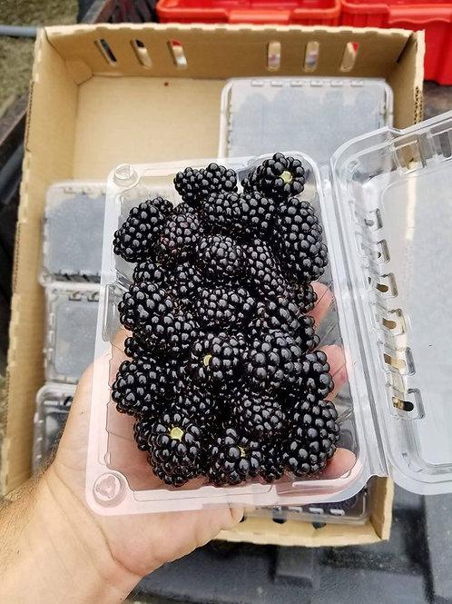 Blackberry 1qt