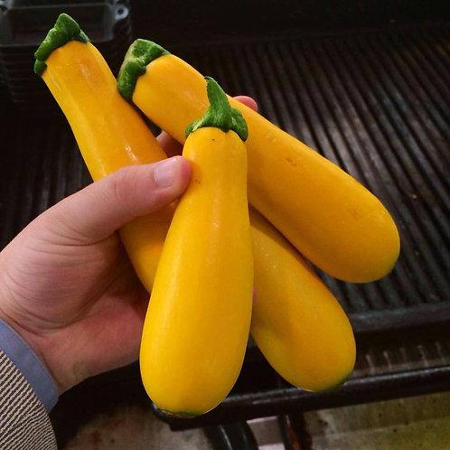 Gold Zucchini 1qt