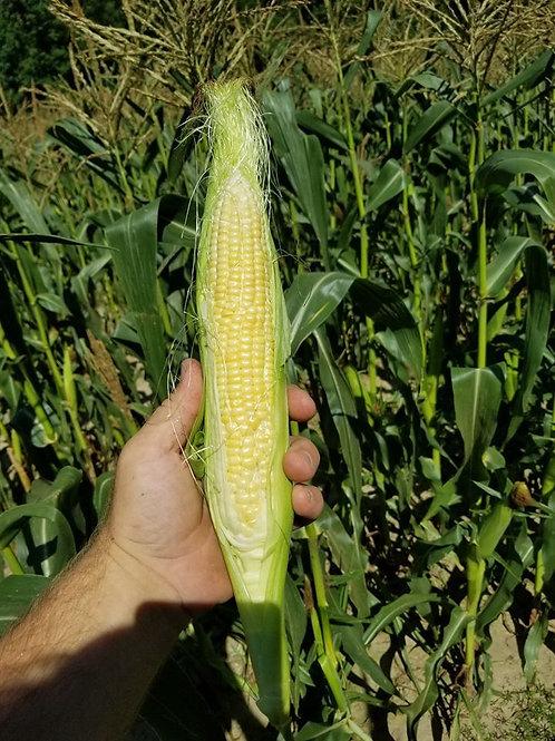 Sweet Corn 1dz