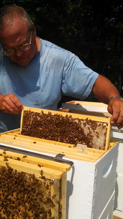 bees for enhanced pollination
