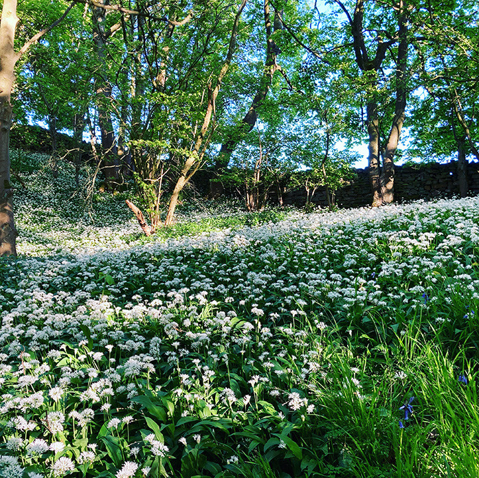 Wild garlic_Swartha Woods_May 2020 WEB.j