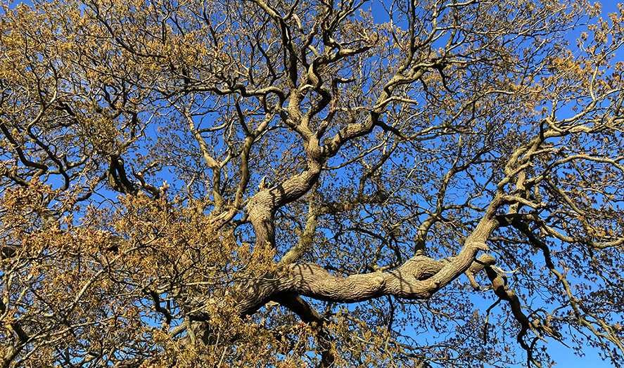 Branches & sky_May 2020.jpg