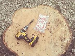 Ecoplug tree stump removal