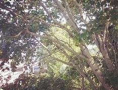 treework cables close proximity tree