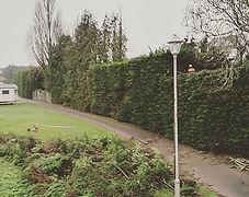 Hedge reduction torquay devon treework